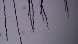 Dandelion filaments