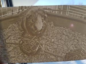 Guinea pig lithophane